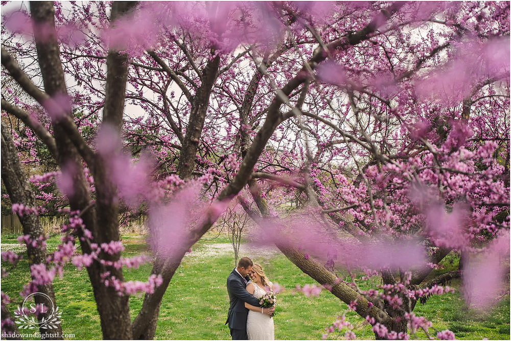 red bud tree wedding photo