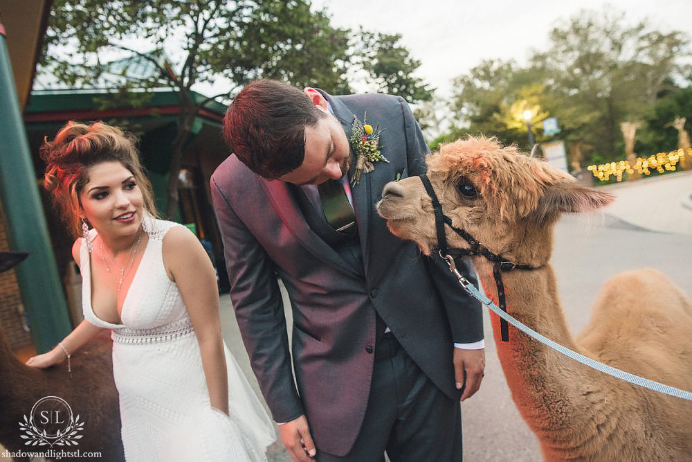 best st louis zoo wedding photography